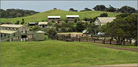 Ace Hi Riding Ranch - Phillip Island Accommodation