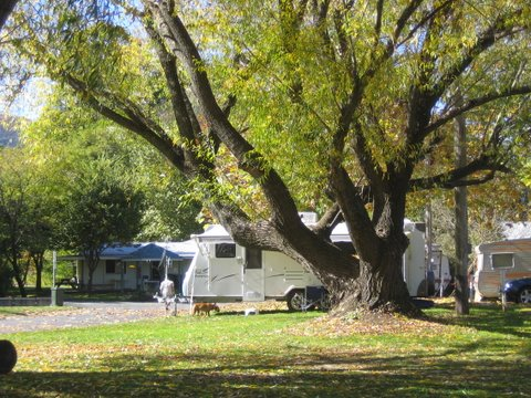 Tumbarumba Creek Caravan Park - Phillip Island Accommodation