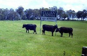 Cluan Homestead - Phillip Island Accommodation