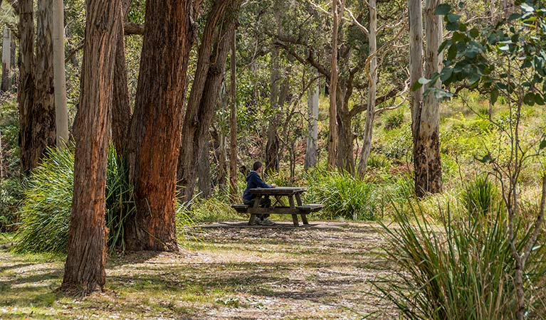 Koreelah Creek campground - Phillip Island Accommodation
