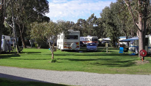 Pinjarra Caravan Park - Phillip Island Accommodation