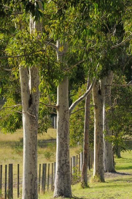 Stringybark Cottages