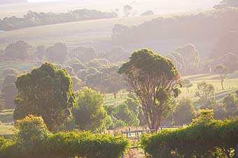 Mackas Farm - Phillip Island Accommodation