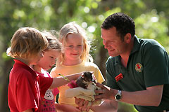 Cleland Wildlife Park - Phillip Island Accommodation