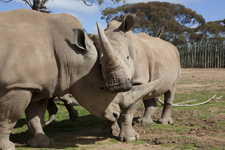 Monarto Zoo - Phillip Island Accommodation