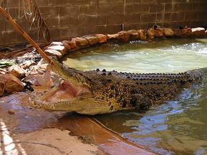 Wyndham Zoological Gardens and Crocodile Park - Phillip Island Accommodation