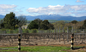 Buller View Wines - Phillip Island Accommodation