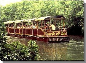 Daintree Rainforest River Trains - Phillip Island Accommodation