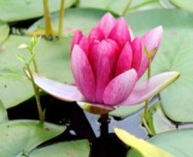 The Lotus Day Spa and Retreat - Phillip Island Accommodation