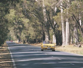 Ludlow Tuart Forest - Phillip Island Accommodation