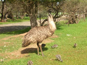Minlaton Fauna Park - Phillip Island Accommodation