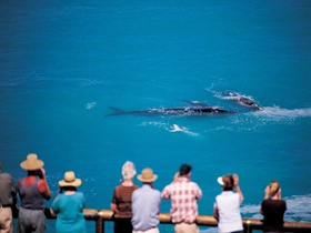 Whale Watching At Head Of Bight - Phillip Island Accommodation