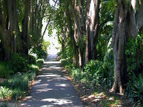 Adelaide Botanic Garden - Phillip Island Accommodation