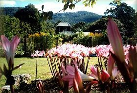 Blueberry Cottage Open Gardens - Phillip Island Accommodation