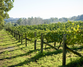 Surveyor's Hill Vineyards - Phillip Island Accommodation