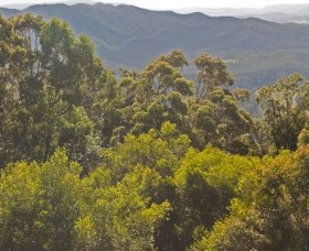 Conondale National Park - Phillip Island Accommodation