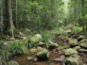 Amamoor State Forest - Phillip Island Accommodation