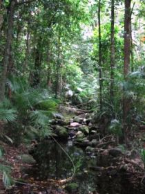 Mossman Gorge Rainforest Circuit Track Daintree National Park - Phillip Island Accommodation