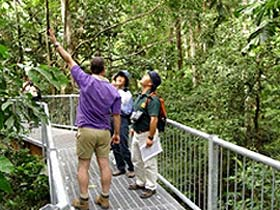 Daintree Discovery Centre - Phillip Island Accommodation