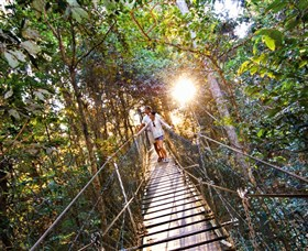Tree Top Walkway - Phillip Island Accommodation
