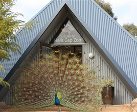 Halls Gap Zoo - Phillip Island Accommodation