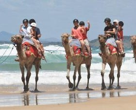 Camel Rides with Coffs Coast Camels
