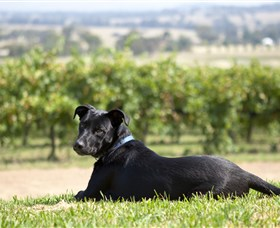 Moothi Estate Vineyard and Cellar Door - Phillip Island Accommodation