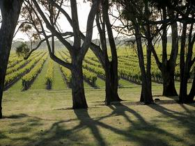 Henry's Drive Vignerons - Phillip Island Accommodation
