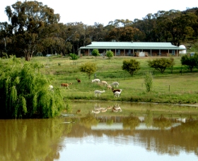 Clearview Alpacas - Phillip Island Accommodation