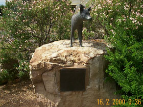 Dingo Statue - Phillip Island Accommodation