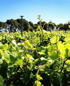 Basalt Wines - Phillip Island Accommodation