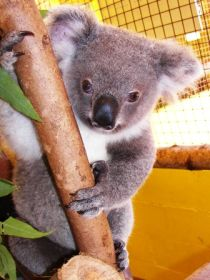 Cooberrie Park Wildlife Sanctuary - Phillip Island Accommodation