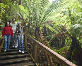 Otway Fly Treetop Adventures - Phillip Island Accommodation