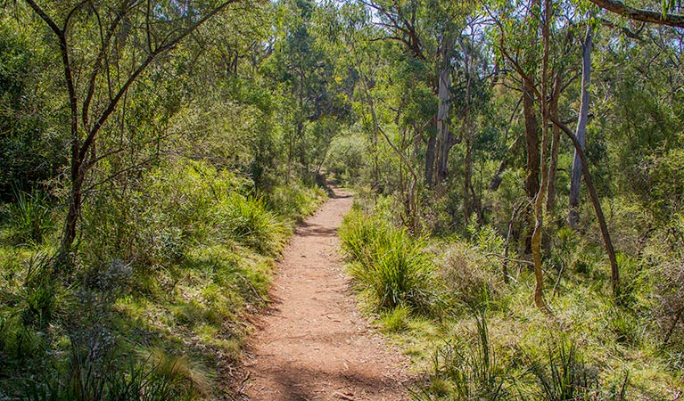 Mares Forest Creek walking track - Phillip Island Accommodation