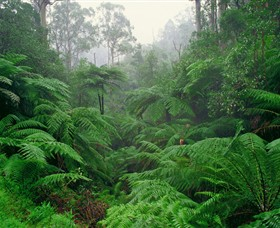 Tarra Bulga National Park - Phillip Island Accommodation