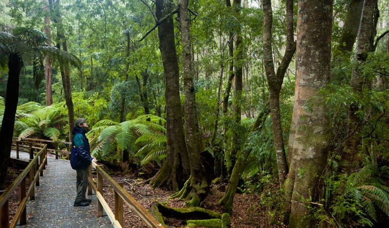 Monga National Park - Phillip Island Accommodation