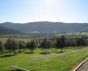 Hastings Valley Olives - Phillip Island Accommodation