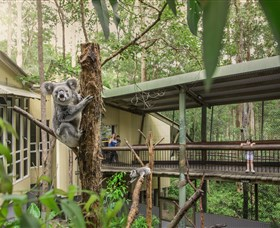 Daisy Hill Koala Centre - Phillip Island Accommodation