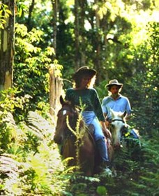 Clarendon Forest Retreat Horse Riding - Phillip Island Accommodation
