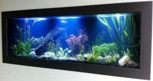 Aquariums in Cairns - Phillip Island Accommodation
