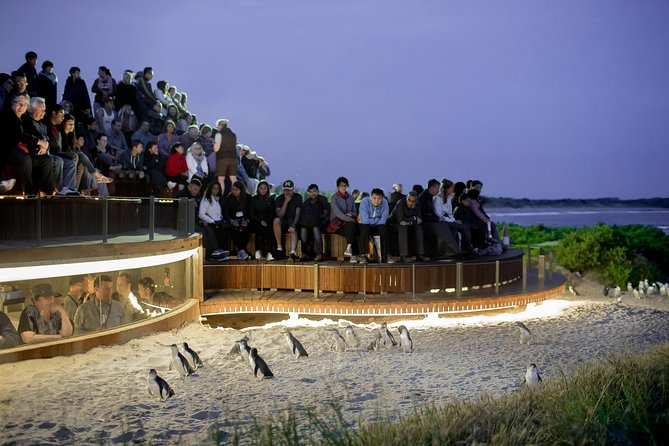 1 Day Private Phillip Island Tour VIP Charter up to 9 People - Phillip Island Accommodation