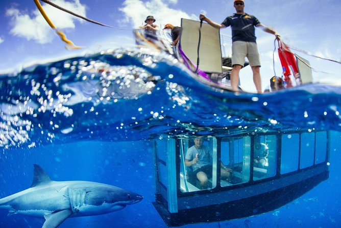 White Shark Tour with Optional Cage Dive from Port Lincoln - Phillip Island Accommodation
