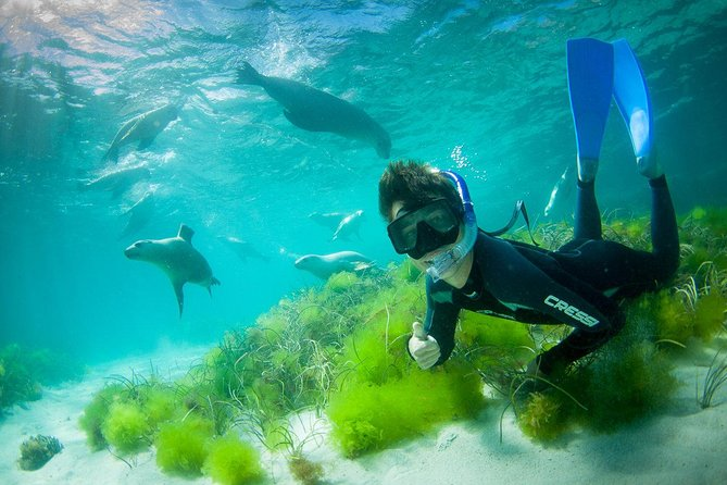 Half-Day Sea Lion Snorkeling Tour from Port Lincoln - Phillip Island Accommodation