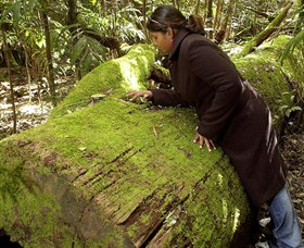 Washpool National Park - Washpool Walk - Phillip Island Accommodation