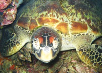 Adrenalin Snorkel and Dive - Phillip Island Accommodation