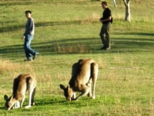 Araucaria Ecotours - Phillip Island Accommodation
